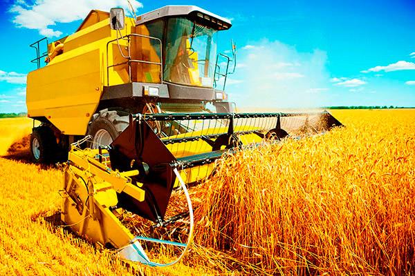 Fattura elettronica. Cooperative agricole, singolo socio con distinta numerazione