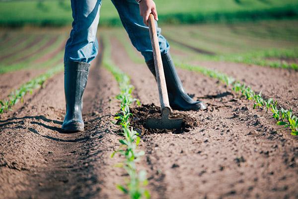Danni in agricoltura, pubblicato il decreto di riforma della gestione del rischio
